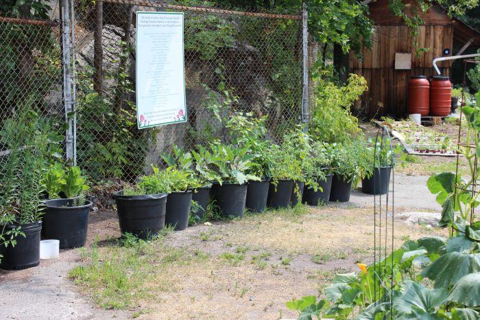 Healthy Food Gardens