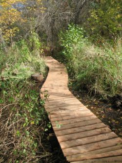 A small boardwalk neighbours put together where a favourite trail often flooded.  This small project makes an important difference every day for everyone enjoying their walk through the woods. (Photo by Naomi Grant)